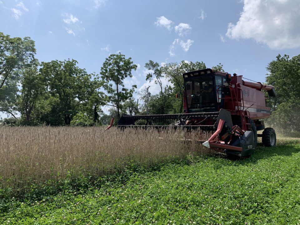 Cold Brook Farm — Our First Grain Harvest | Oldwick, NJ
